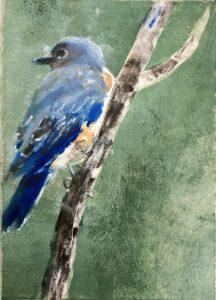 Eastern Bluebird #5
